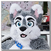 Eurofurence 2014 fursuit photoshoot. Preview picture of Marbles Woofy