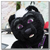 Eurofurence 2014 fursuit photoshoot. Preview picture of Nom Nom Crunch