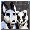 Eurofurence 2014 fursuit photoshoot. Preview picture of JazzBadger, Zuzu
