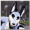 Eurofurence 2014 fursuit photoshoot. Preview picture of Zuzu