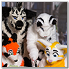 Eurofurence 2014 fursuit photoshoot. Preview picture of Sasha, Mira, Bostitch, …