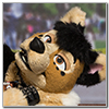 Eurofurence 2014 fursuit photoshoot. Preview picture of Avik
