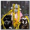 Eurofurence 2014 fursuit photoshoot. Preview picture of Sunshine, Klaatu, Fuzzy Ferretti