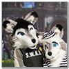 Eurofurence 2014 fursuit photoshoot. Preview picture of Softwolfi, Jenna