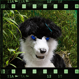 Eurofurence 2015 fursuit photoshoot. Preview picture of Bolt, Blackie