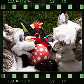 Eurofurence 2015 fursuit photoshoot. Preview picture of Softwolfi, Stopfi, Jacky