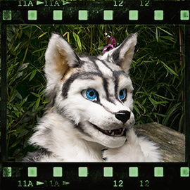 Eurofurence 2015 fursuit photoshoot. Preview picture of Huscai