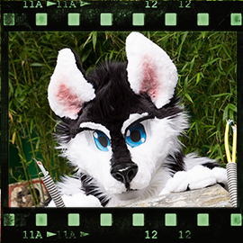 Eurofurence 2015 fursuit photoshoot. Preview picture of Sunny