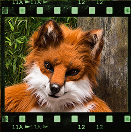 Eurofurence 2015 fursuit photoshoot. Preview picture of Fauho