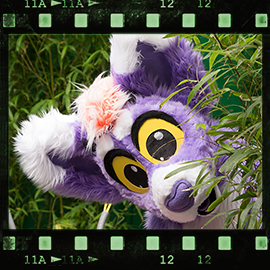 Eurofurence 2015 fursuit photoshoot. Preview picture of Amber Claw Petrichor