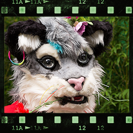 Eurofurence 2015 fursuit photoshoot. Preview picture of Silberpfote