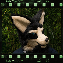 Eurofurence 2015 fursuit photoshoot. Preview picture of Cheenook Wolfskin