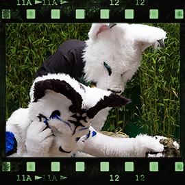 Eurofurence 2015 fursuit photoshoot. Preview picture of EarthY, Whitey Lynx