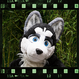 Eurofurence 2015 fursuit photoshoot. Preview picture of Jett