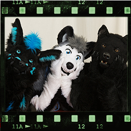 Eurofurence 2016 fursuit photoshoot. Preview picture of KatariaWolf, BerkWolf, Skeppo